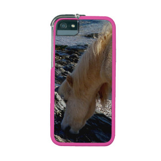 South Devon Beach Shetland Pony Eating Seaweed Case For iPhone 5