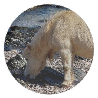 South Devon Beach Shetland Pony Eating Seaweed Dinner Plates