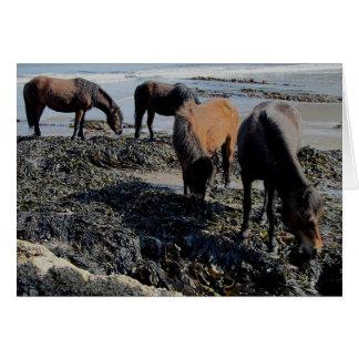 South Devon  Four Dartmoor Ponies Eating Seaweed Greeting Card