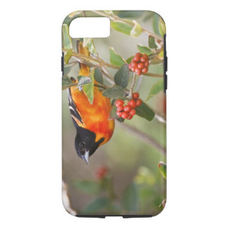 South Padre Island, Texas, USA, Baltimore Oriole iPhone 7 Case