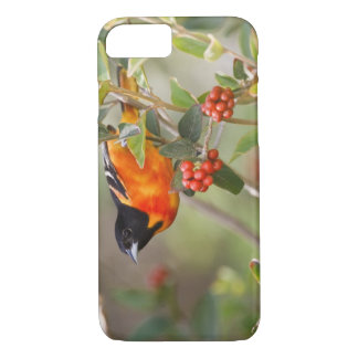 South Padre Island, Texas, USA, Baltimore Oriole iPhone 8/7 Case
