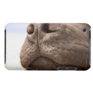 Spain, Costa Blanca, Close-up of chocolate Case-Mate iPod Touch Case