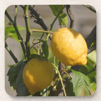 Spanish Lemon Graphics Coaster