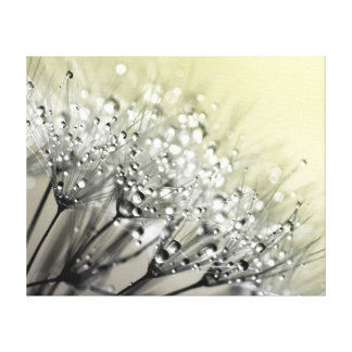 Sparkling Dew Dandelion Cream Background Canvas Print