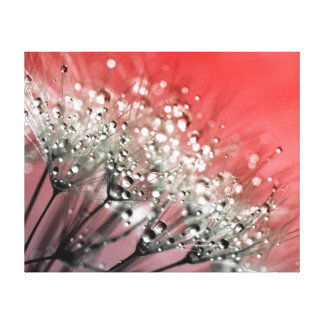 Sparkling Dew Dandelion Red Background Canvas Print