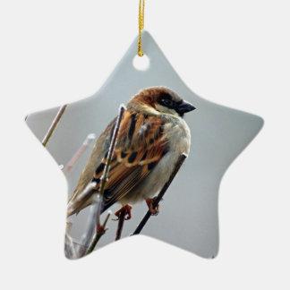 sparrow-bird-animal-nature ceramic star decoration