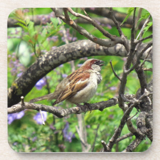 Sparrow on a branch drink coasters