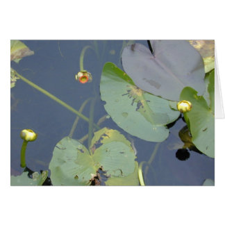Spatterdock in the Florida Everglades, 1999 Card