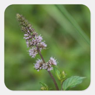 Spearmint Purple Wildflower Floral Square Stickers