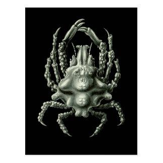 Spider Crab Postcard