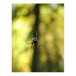Spider in the Woods Postcard