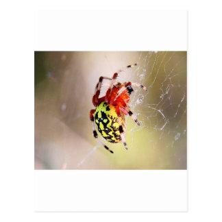 Spider! Postcard