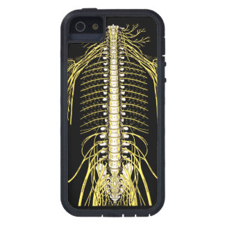 Spinal Nerves Anatomy Image Chiropractic iPhone 5 Covers