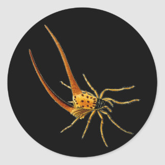 Spined Spiders Classic Round Sticker