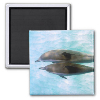 Spinner Dolphins | Oahu Hawaii Magnet