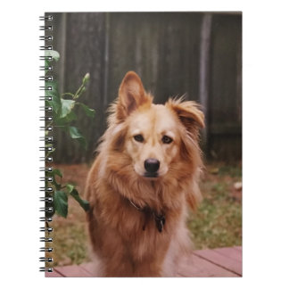 Spiral notebook with photo of a dog