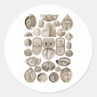 Spirobranchia Classic Round Sticker