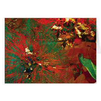 """Splash Collection"" - Pohutukawa Flower Card"