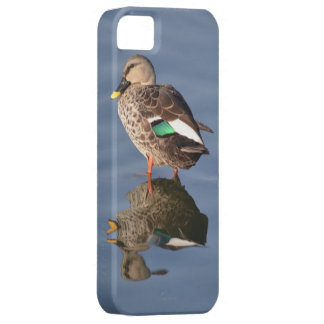 spot billed duck barely there iPhone 5 case