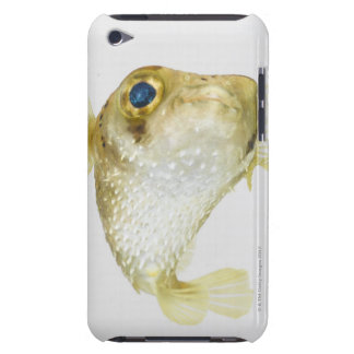 Spot-fin porcupinefish (Diodon hystrix) Barely There iPod Covers