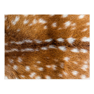 Spotted deer fur texture postcard