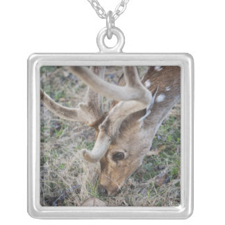 Spotted deer or chital in Indian tiger reserve Silver Plated Necklace