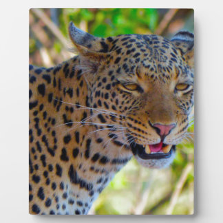 Spotted Leopard Plaque