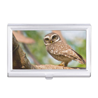 Spotted owl on morning flight. business card holder