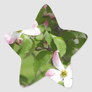 Spring Blooming Pink Dogwood Blossoms Star Sticker