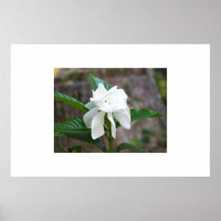 Spring Flower Framed Picture Poster
