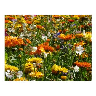 Spring Flowers Meadow Postcard