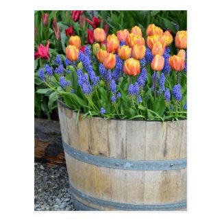 Spring orange tulip planter print postcard