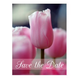 Spring pink tulip flower wedding save the date postcard