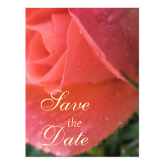 Spring Rosebud Save the Date Postcard