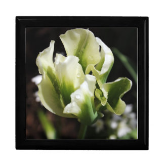 Spring Showers Tulip Garden Botanical Photography Gift Box