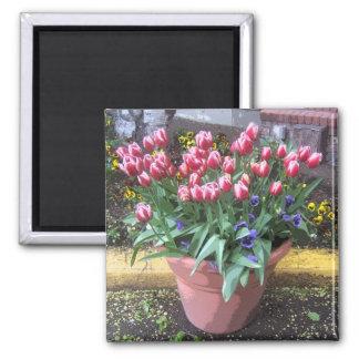 Spring Tulip Clay Pot Square Magnet