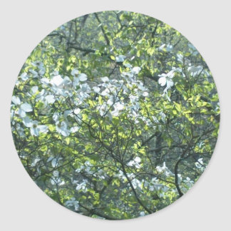 spring white dogwood flowers classic round sticker