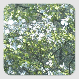 spring white dogwood flowers square sticker