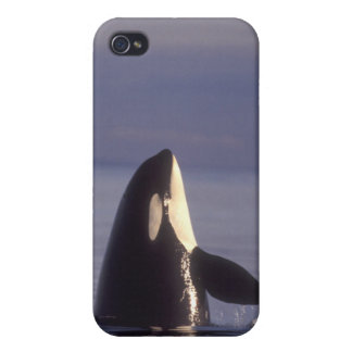Spyhopping Orca Killer Whale (Orca orcinus) near iPhone 4 Covers