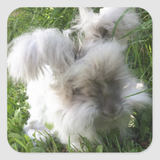 "Square Stickers - English Angora Rabbit ""Bradley"""