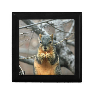 Squirrel Eating a Nut Small Square Gift Box