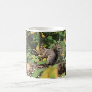 Squirrel in Autumn Mug