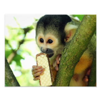Squirrel Monkey Eating a Wafer Biscuit Photo Print