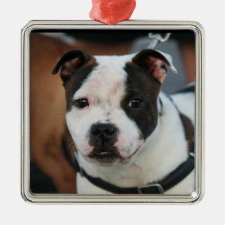 Staffordshire bull terrier christmas ornament