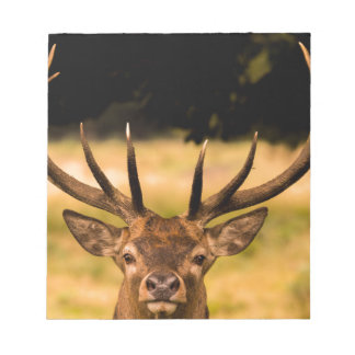 stag of richmond park notepads
