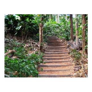 Stairs in Their Natural Habitat Postcard