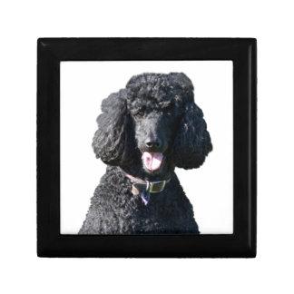 Standard Poodle dog black beautiful photo portrait Gift Box
