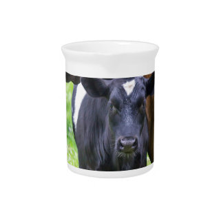 Standing brown mother cow with black white calf pitcher