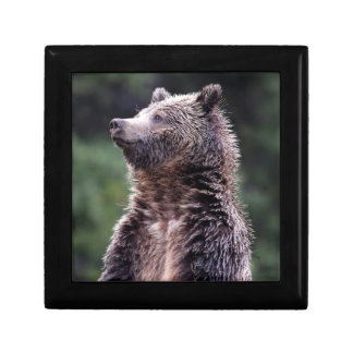 Standing Grizzly Bear Gift Box