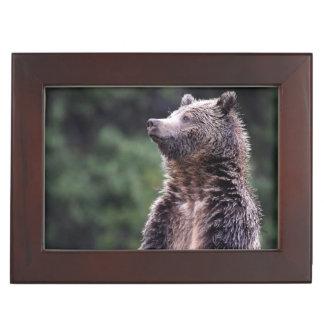 Standing Grizzly Bear Keepsake Box